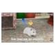 Petz: My Baby Hamster