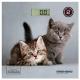 Весы REDMOND RS-735 (котята)