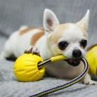 229.19руб. 30% СКИДКА|Интерактивная игрушка для собак зубная щетка EVA мяч для собак с веревкой 9/6. 4 см размер игрушки для домашних животных щенков плавающие в воде товары для домашних животных-in Игрушки для собак from Дом и животные on AliExpress