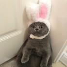 Забавный милый костюм для домашних животных, косплей, шапка с кроликом для кошки, Хэллоуин, Рождество, Новый Год, одежда, нарядное платье, акс...