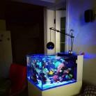 € 174.51 5% de DESCUENTO|Luz LED coral grow marine reef tank blanco azul acuario pecera SPS LPS color grow mini nano control inalámbrico iphone app en Iluminación de Hogar y Jardín en AliExpress.com | Alibaba Group