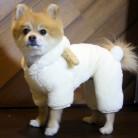 729.21 руб. 10% СКИДКА|Забавная Одежда для собак зимняя одежда для косплея для собак Чихуахуа Йоркширский Мопс костюм для собак комбинезон купить на AliExpress