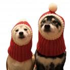 586.77 руб. 27% СКИДКА|Рождественский вязаный магазин домашних животных теплые милые шапки для собак для домашних животных кошек теплое зимнее Вязание головной убор для собак собачка в шапочке для щенков котят-in Кепки для собак from Дом и сад on Aliexpress.com | Alibaba Group
