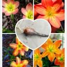 88.76 руб. 10% СКИДКА|2 лампы амариллис белый (луковая Орхидея лампа) неприхотливое растение, балкон Забавный Крытый Outdoo цветочный горшок для цветка-in Бонсай from Дом и сад on Aliexpress.com | Alibaba Group