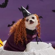 1шт Плащ для собак на Хэллоуин и 1шт шляпа для собак