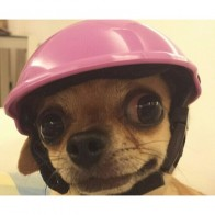 Pet Забавные крутые мотоциклы велосипедный шлем регулируемый головной убор шапка для собак для защиты от солнца и дождя