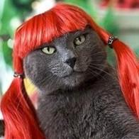[MPK Pet Store] красный парик для домашних животных, забавный и милый парик для кота, парик для собак, искусственный апельсин, красные волосы для до...