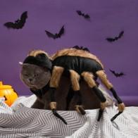 Костюм для кошек с пауком на Хэллоуин