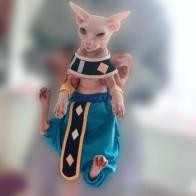 Косплэй Сфинкс голая cat заказной хлопковые пелерины с заниженным шаговым швом Штаны драконов Кошки Одежда для домашнего питомца