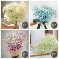 US $0.1 60% OFF|100 pcs Gypsophila Paniculata Plant Outdoor & Indoor Perennial Garden Flower Ornaments Bonsai for Wedding Decor Easy to Grow-in Bonsai from Home & Garden on Aliexpress.com | Alibaba Group