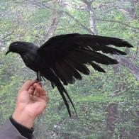Около 40x25 см Моделирование Перья птиц черный игрушка ворона модель подарок украшения H1067 купить на AliExpress