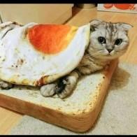 Милые одеяла для домашних животных с омлетами, короткий плюшевый коврик для домашних животных, прочный теплый коврик для яиц-пашот, коврики ...