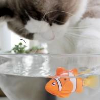 40.55 руб. 10% СКИДКА|[Магазин MPK], рыба с питанием от аккумулятора, игрушка для котов-in Игрушки для кошек from Дом и сад on Aliexpress.com | Alibaba Group
