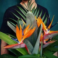 533.39 руб. 25% СКИДКА|Искусственный цветок райская птица стрелитция пол искусственный цветок на ощупь зеленое растение украшение цветок для комнаты Свадебная вечеринка 80 см-in Искусственные и сухие цветы from Дом и животные on Aliexpress.com | Alibaba Group