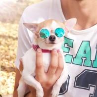 € 1.18 |Gafas de sol para perros y gatos, gafas de sol para mascotas, accesorios para fotos, accesorios para perros y gatos, suministros para mascotas gafas gafas-in Accesorios para perros from Hogar y jardín on Aliexpress.com | Alibaba Group