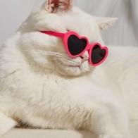 1pair Heart Pet Glasses
