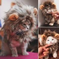 Забавный милый костюм кота льва грива парик шапка для кошки собаки Хэллоуин Рождественская одежда нарядное платье с ушками одежда для дома...