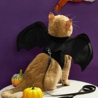 Костюм для кошек с летучей мышью на Хэллоуин