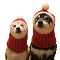 603.14 руб. 28% СКИДКА|Рождество Вязаные домашние животные магазине теплые милые шапки для собак для домашних животных кошек зимние теплые Вязание головной убор для собак собачка в шапочке для щенков котята купить на AliExpress