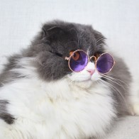 73.61 руб. 10% СКИДКА|Модные солнцезащитные очки для кошек аксессуары для домашних животных летняя собака кошка очки гребень Различные цвета Интересные Товары для домашних животных купить на AliExpress