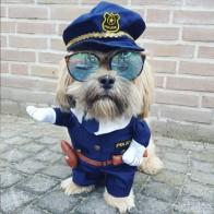 Забавная Одежда для собак Pet костюм cool dog Хеллоуин костюм щенок одежда наряд для собаки Костюмы медсестра полицейский 20S2Q