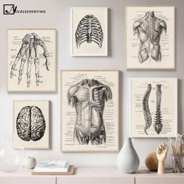 Анатомия человека художественная медицинская Настенная картина мышечный Скелет ВИНТАЖНЫЙ ПЛАКАТ скандинавский холст печать Образование ...