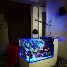 € 174.51 5% de DESCUENTO Luz LED coral grow marine reef tank blanco azul acuario pecera SPS LPS color grow mini nano control inalámbrico iphone app en Iluminación de Hogar y Jardín en AliExpress.com   Alibaba Group