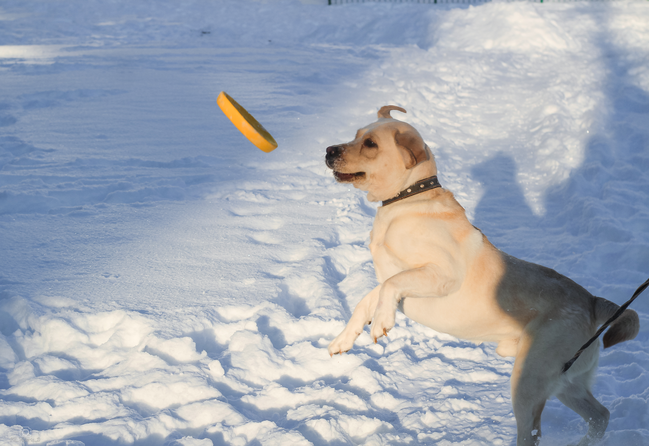 Игрушки для собак больших пород