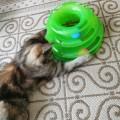 Крутая игрушка для кошки