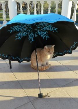 Шикарный зонт от бренда MUERHUA