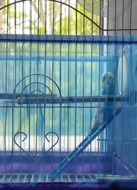 Сетка на клетку для попугая
