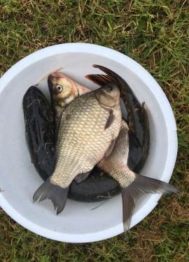 Лучшие гаджеты для трофейной рыбалки