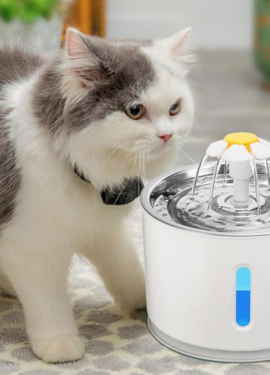 Automatic Pet Cat Water Fountain.