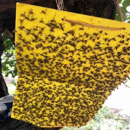 Ловушка для насекомых.