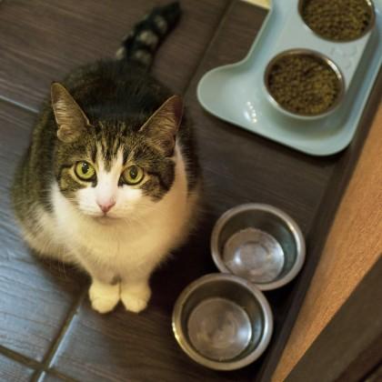 """Миска """"непросыпайка"""" для домашних животных небольшого размера."""