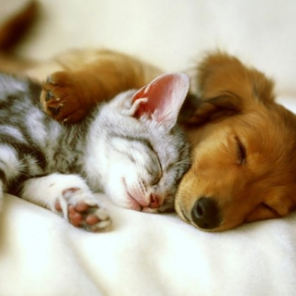 Обзор на лучшие товары для домашних животных