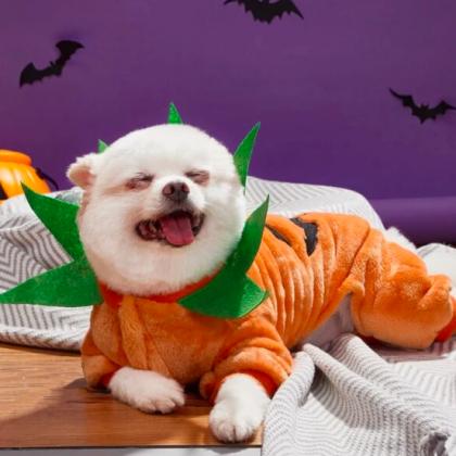 Хэллоуин-2020: костюмы и игрушки для питомцев