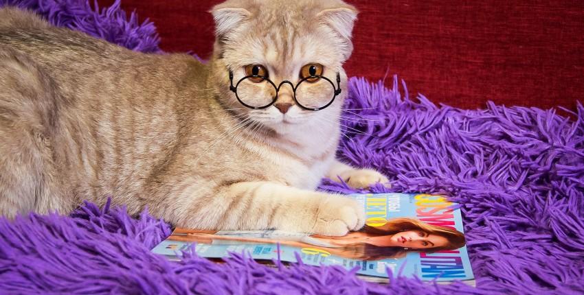 Очки для кошки - отзыв покупателя