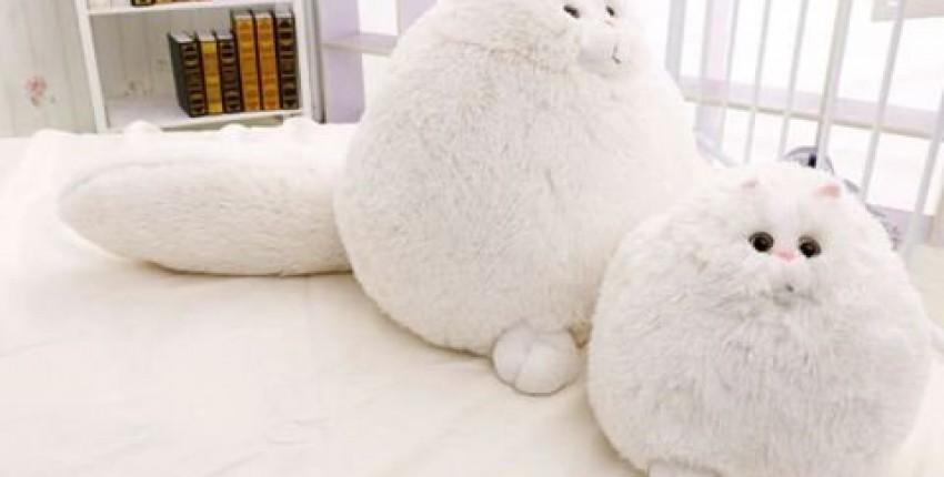 Тот самый Персидсий котик из AliExpress - отзыв покупателя