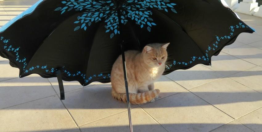 Шикарный зонт от бренда MUERHUA - отзыв покупателя
