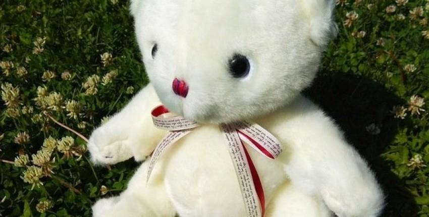Милый мишка от DL plush toy Store - отзыв покупателя