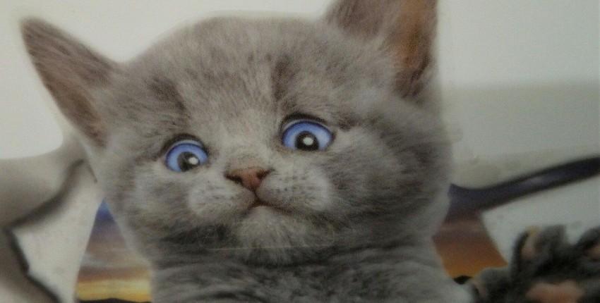 """Котик. Наклейка на крышку """"Горшка"""" - отзыв покупателя"""