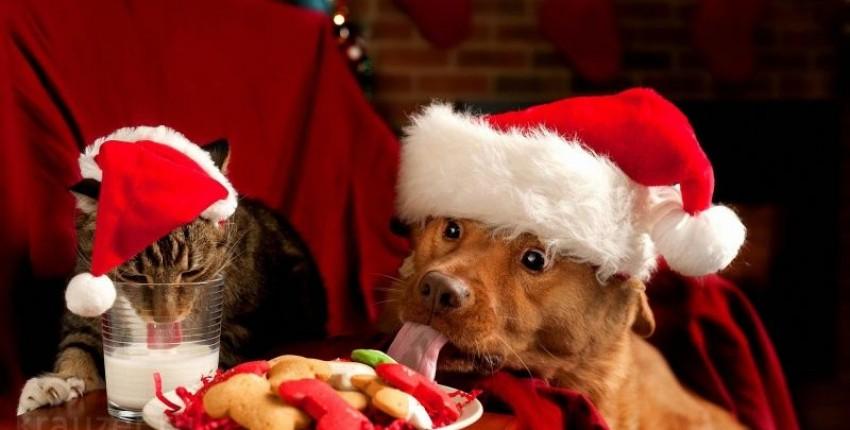 Новогодние костюмы для животных