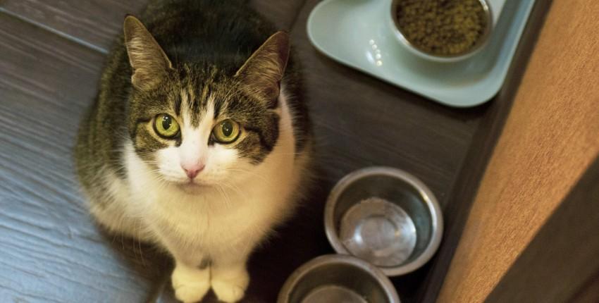 """Миска """"непросыпайка"""" для домашних животных небольшого размера. - отзыв покупателя"""