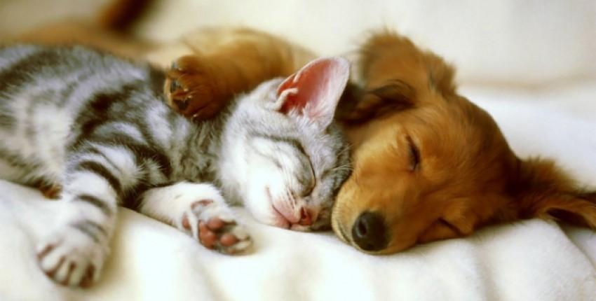 Обзор на лучшие товары для домашних животных - отзыв покупателя