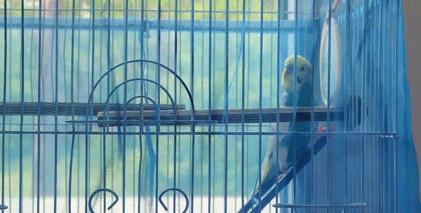 Сетка на клетку для попугая - отзыв покупателя