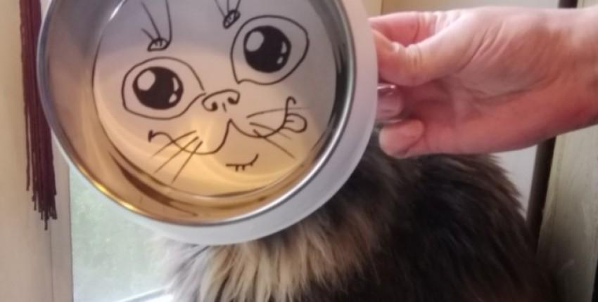 Мисочка для котика - отзыв покупателя