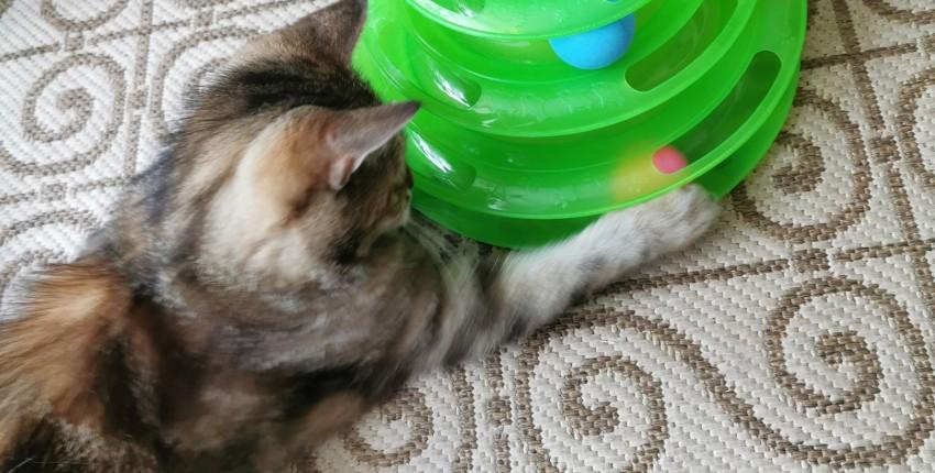 Крутая игрушка для кошки - отзыв покупателя