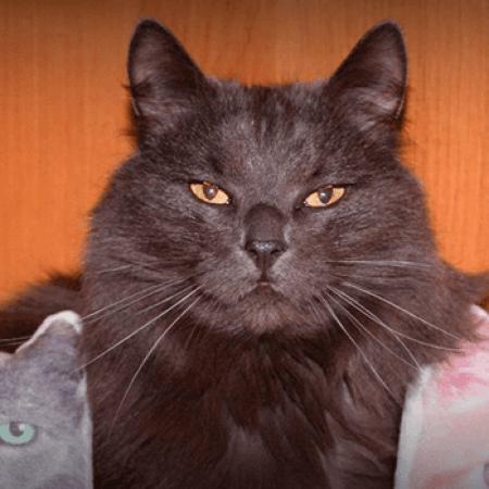 Обзор на кота. Серьезно